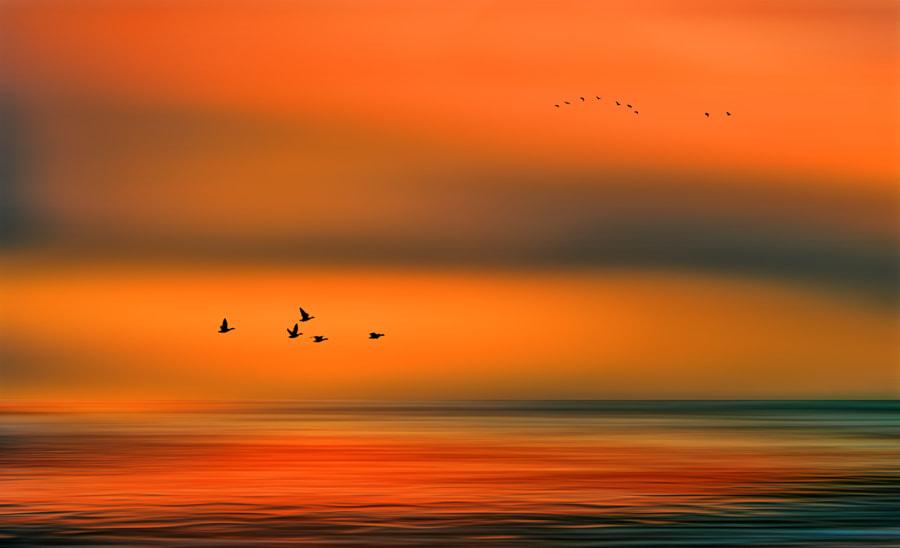 Solitude 405 by Wim Koopman on 500px.com