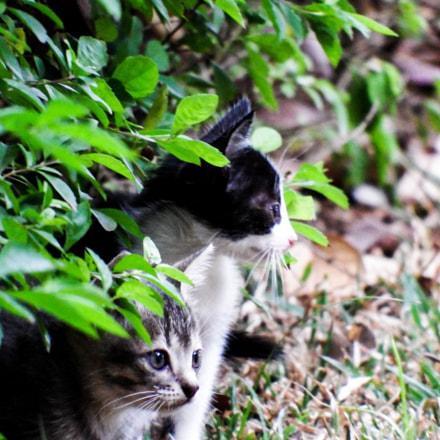 Two kittens, Fujifilm FinePix S1
