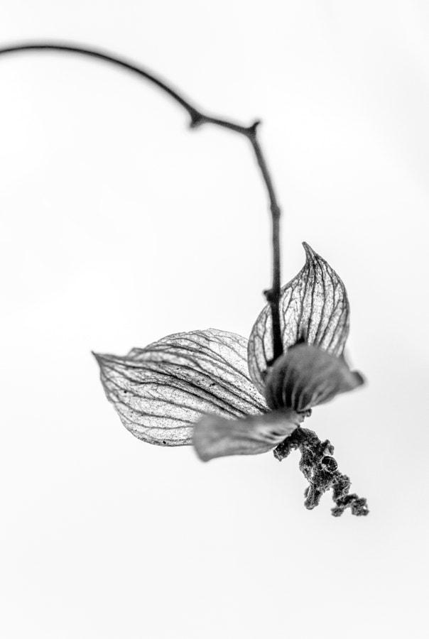 L'oiseau (the bird) de Christine Druesne sur 500px.com