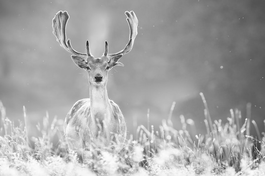 Photograph whatcha! by Mark Bridger on 500px