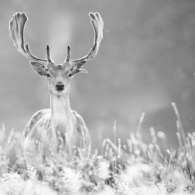 whatcha! by Mark Bridger (bridgephotography)) on 500px.com
