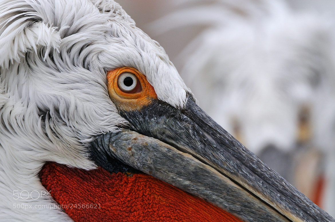 Photograph Close Watch by Harry  Eggens on 500px