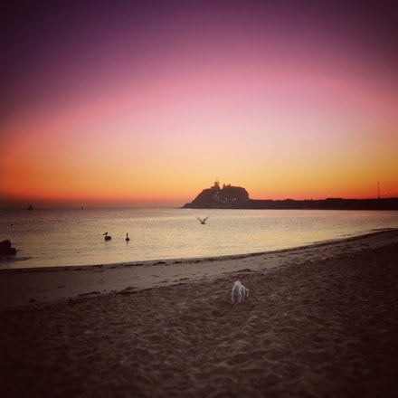 Dusk at the dog beach