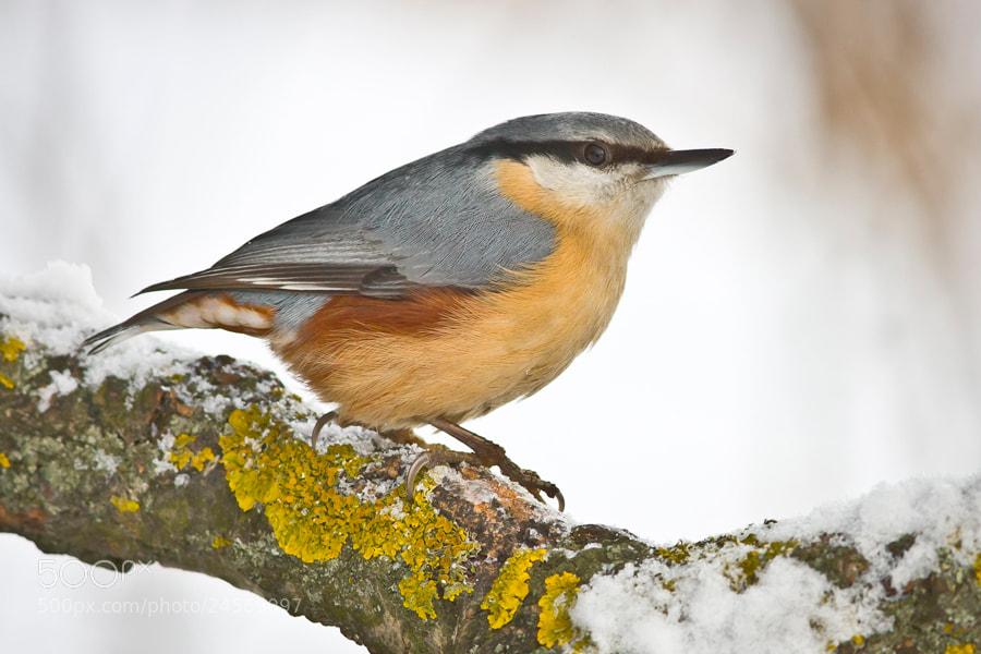 Photograph Winter Season by Felix de Vega on 500px