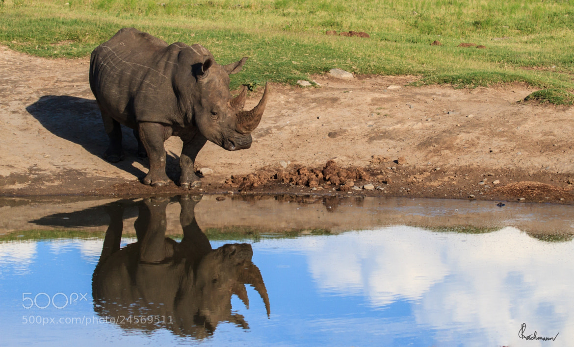 Photograph Reflect on Rhino by Christo Rachmann on 500px