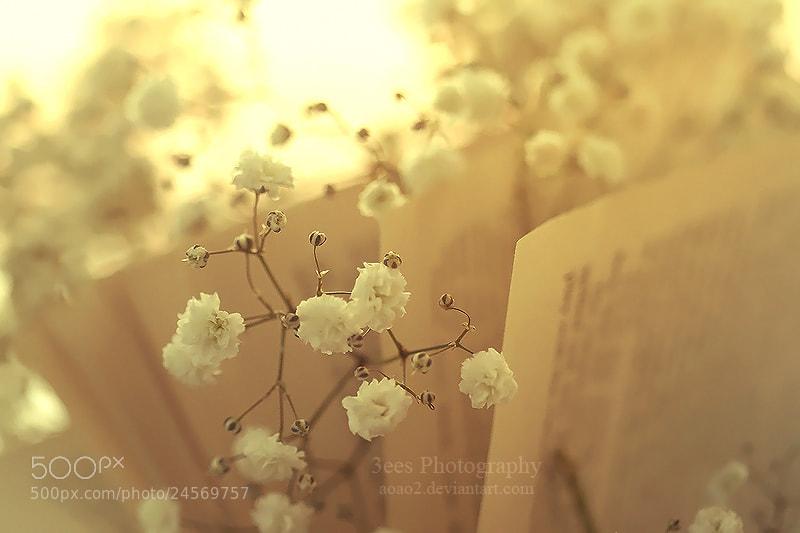 Photograph flora  by Essa Al Mazrooei on 500px