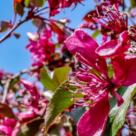 Flowers, Fujifilm FinePix S1500
