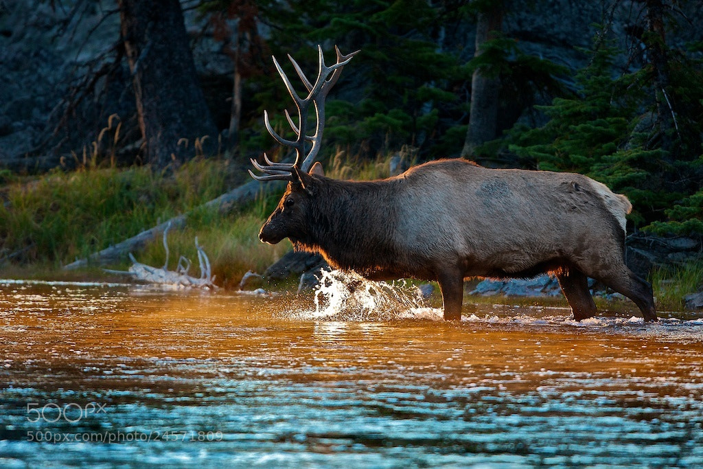 Photograph The Crossing II  by Buck Shreck on 500px
