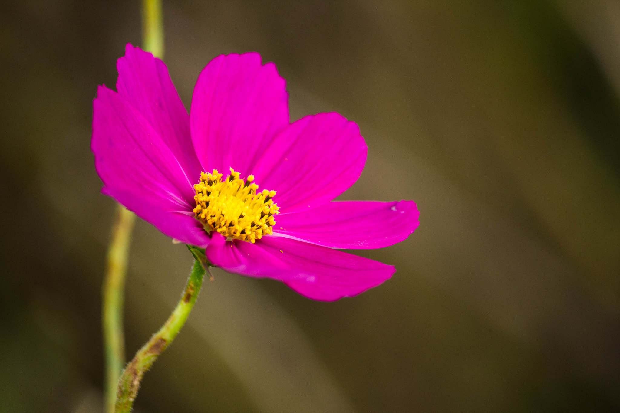 Photograph PINK by Eakkapon Wipobpat on 500px