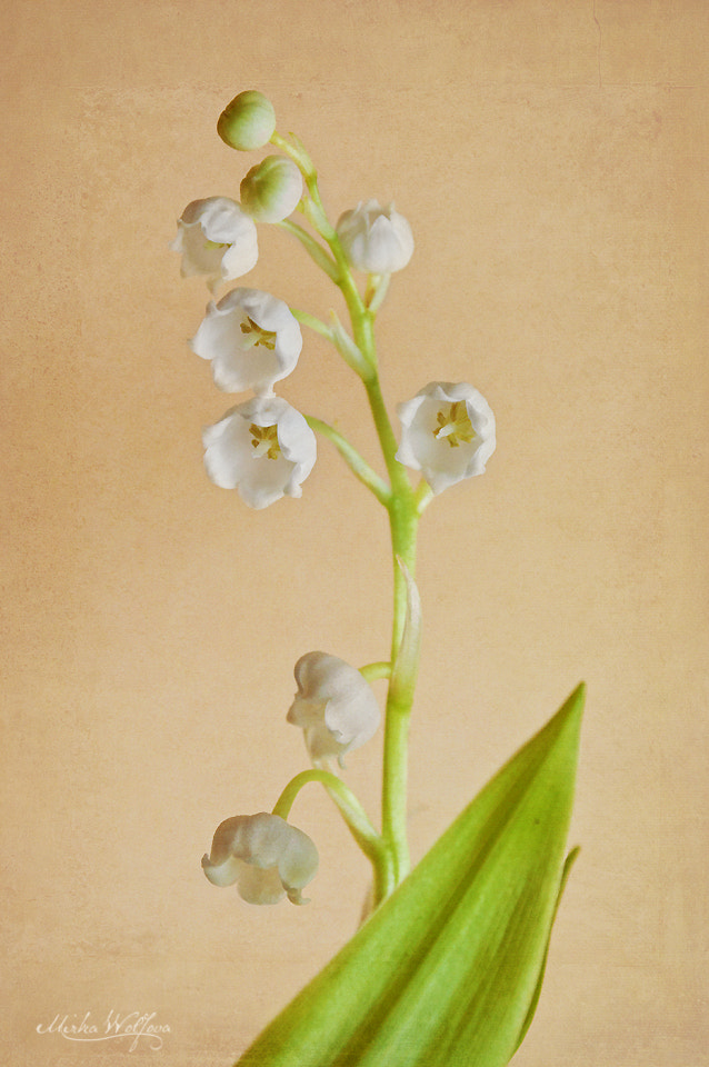 Photograph Lily of the valley by Mirka Wolfova on 500px