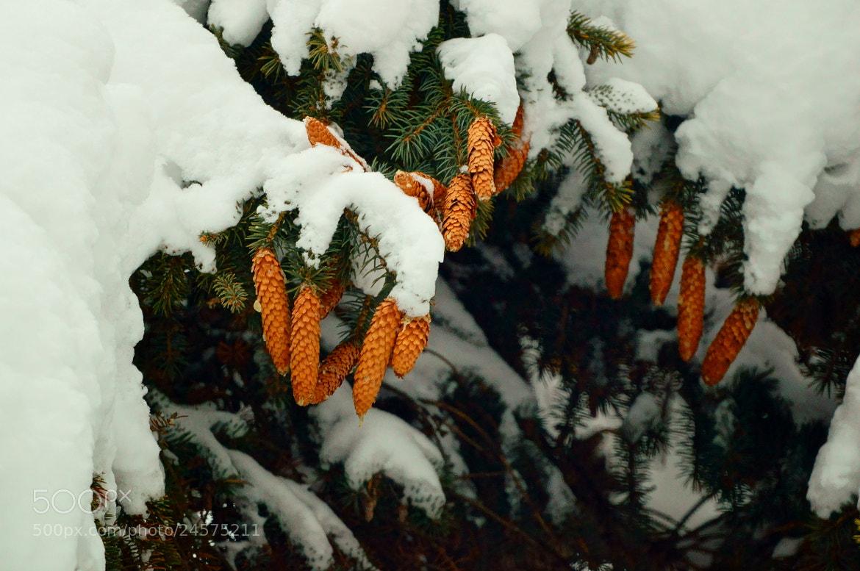 Photograph Winter... by Grigory Nesvetaev on 500px