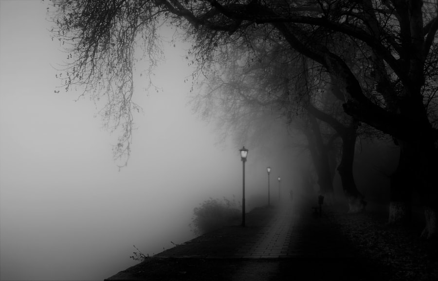 Foggy Walk, автор — Ioannis Ioannidis на 500px.com