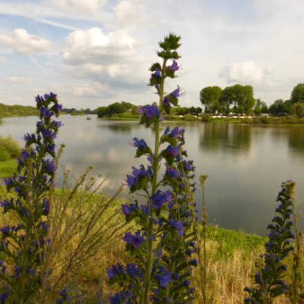 Nevers - river flowers, Panasonic DMC-TZ36