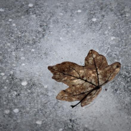 Frozen leaf, Canon EOS 550D