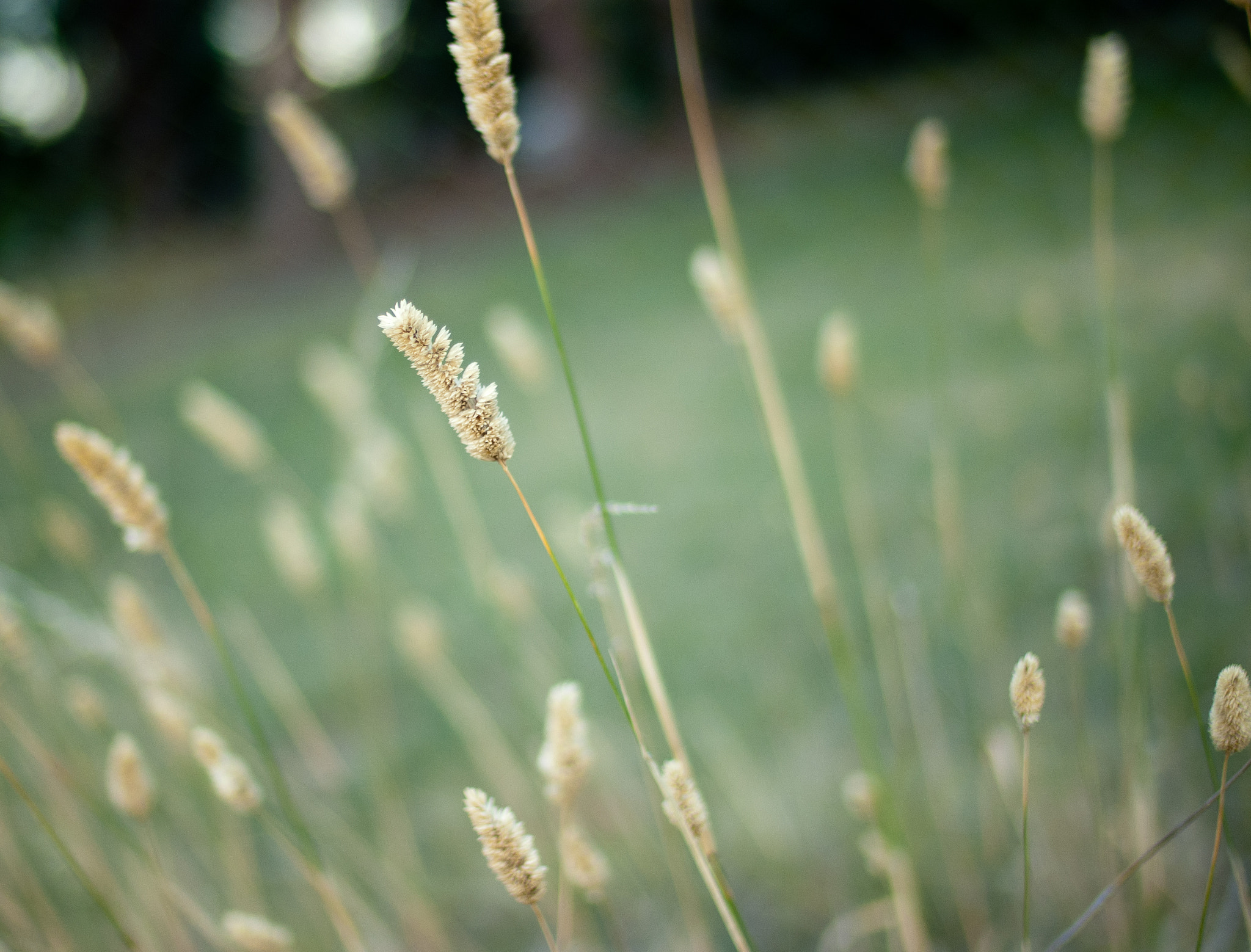 Photograph wild grasses by alistair noble on 500px