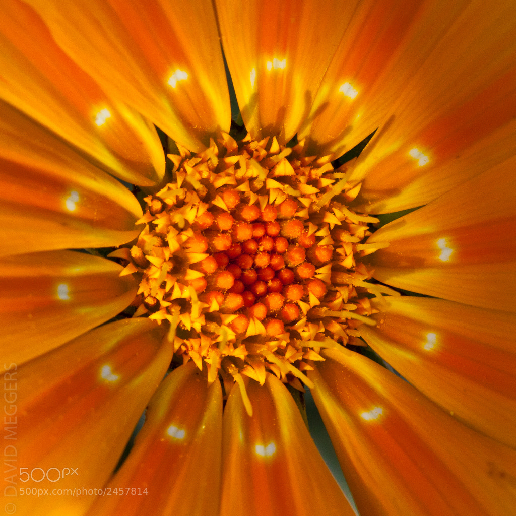 Photograph 1x1 Flower 001 by David Meggers on 500px