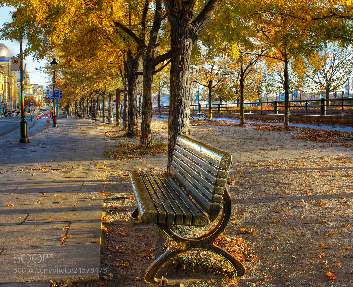 Photograph The bench by Michel Bellemare on 500px