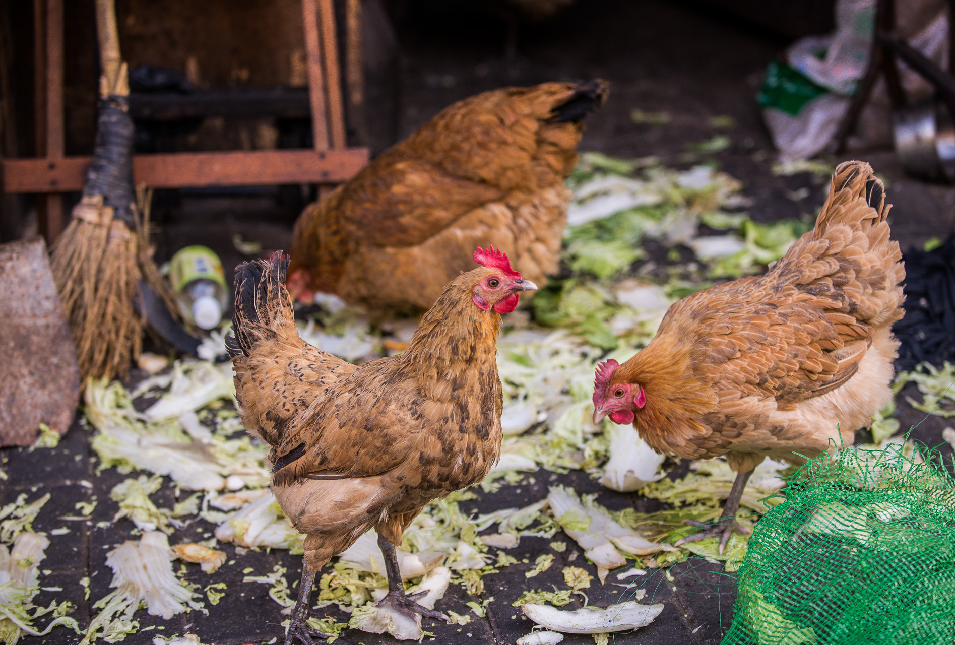 Photograph Poultry in the Making by Kevin Dharmawan on 500px