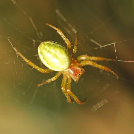 Aranha (Spider), Canon EOS 600D