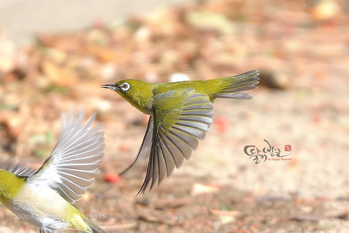 Photograph White-Eye by Jung-Rae Cho on 500px