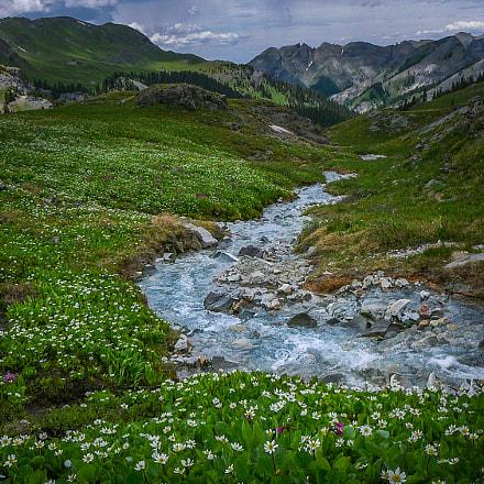 Alpine Fields of Flowers, Panasonic DMC-TZ1