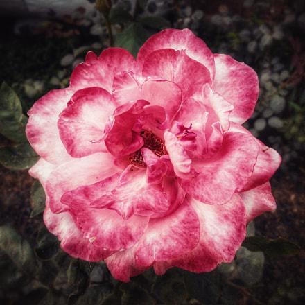 POWER OF FLOWER, Nikon COOLPIX S3400