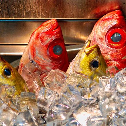 Fish, Sony DSC-F828