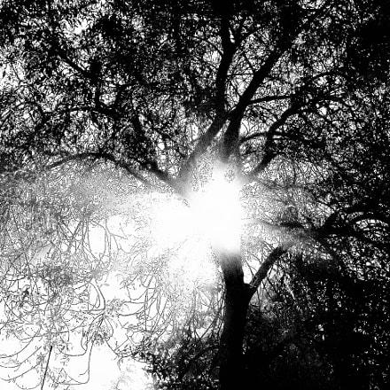 Jungle in Cévennes (), Sony DSC-W320