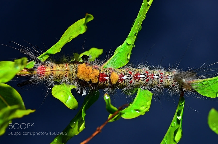 Photograph Colorful Caterpillar by Haris Putra on 500px