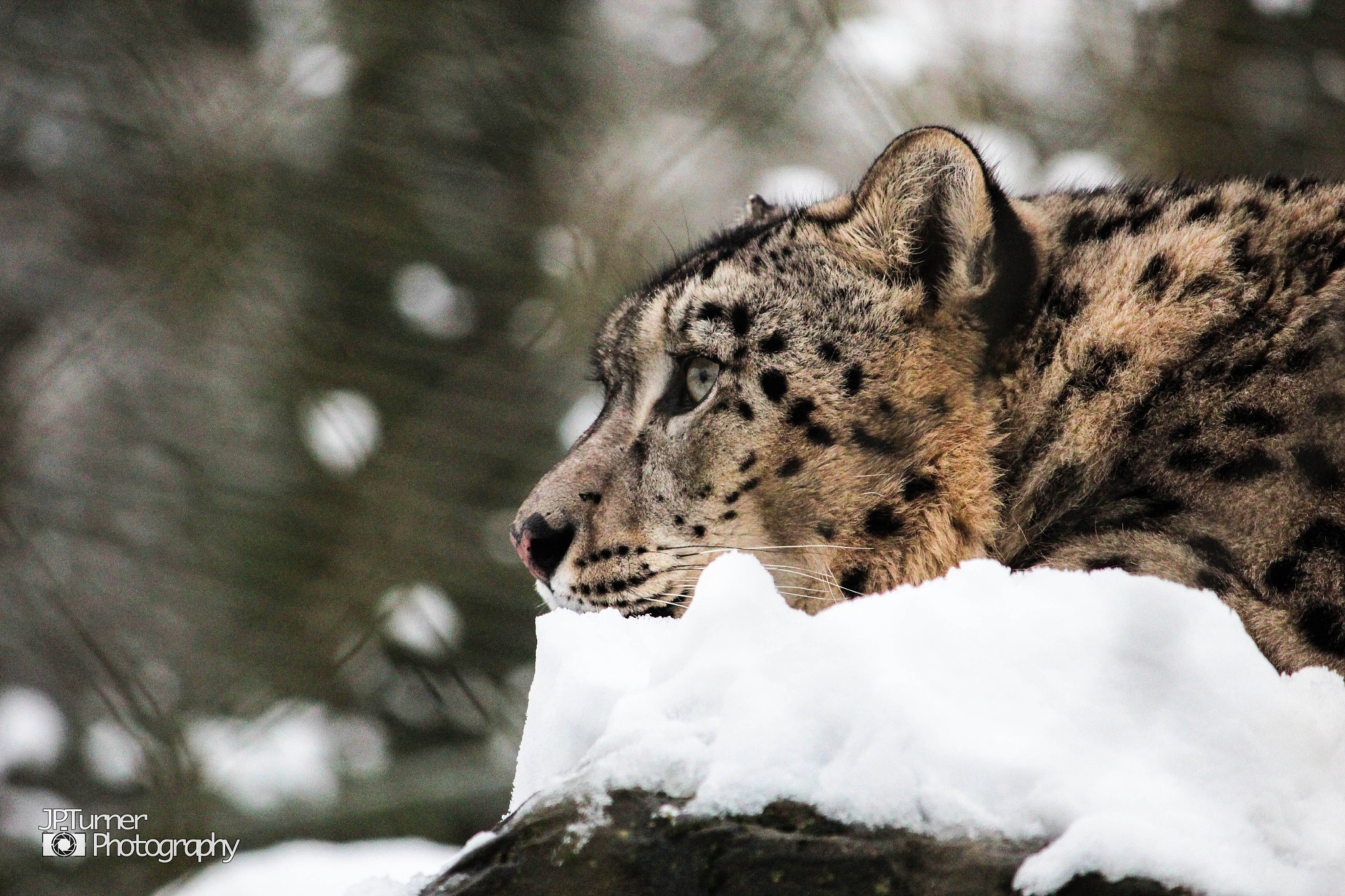 Photograph Snowy by Jona Turner on 500px