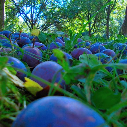 Autumn fruits, Nikon COOLPIX L23