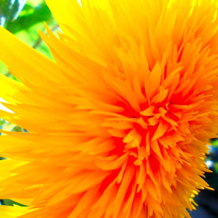 Autumn flowers, Nikon COOLPIX L23