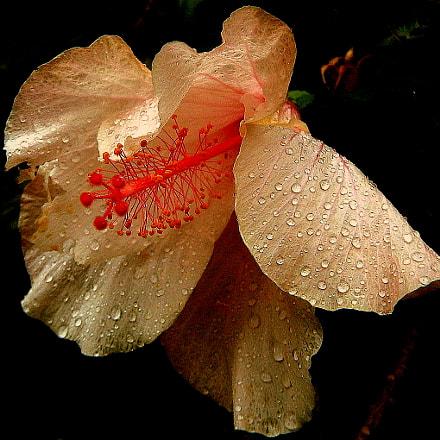 rain in the garden, Fujifilm FinePix SL1000