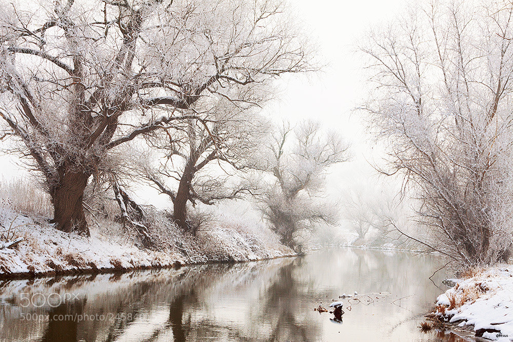 Photograph Foggy winter landscape by F Levente on 500px