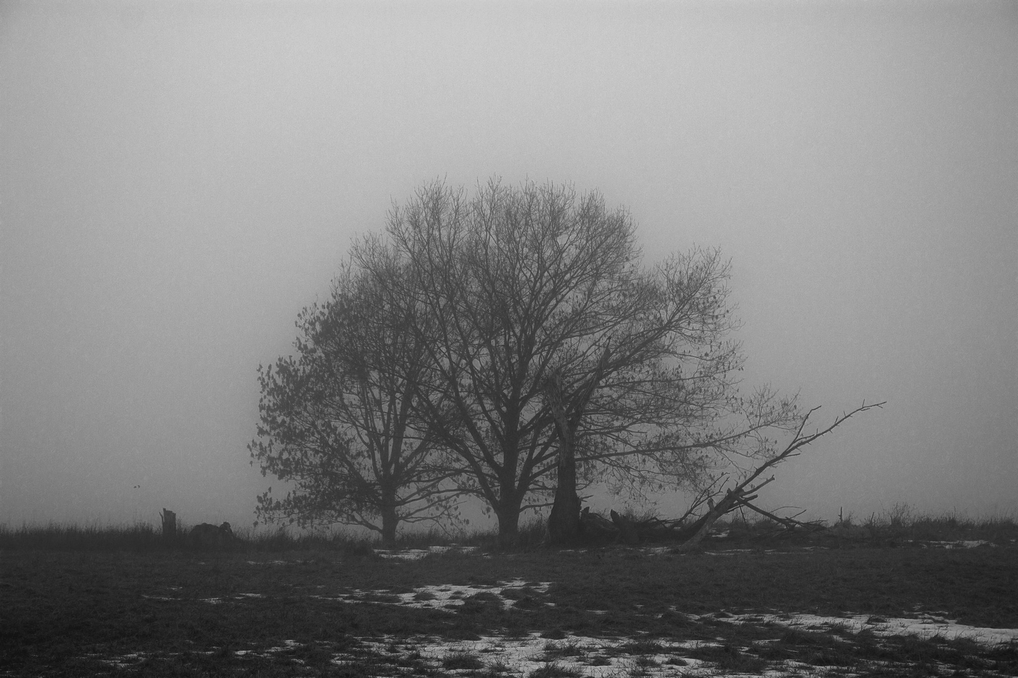 Photograph Lonely set of trees in the fog by Christine Skulevold on 500px