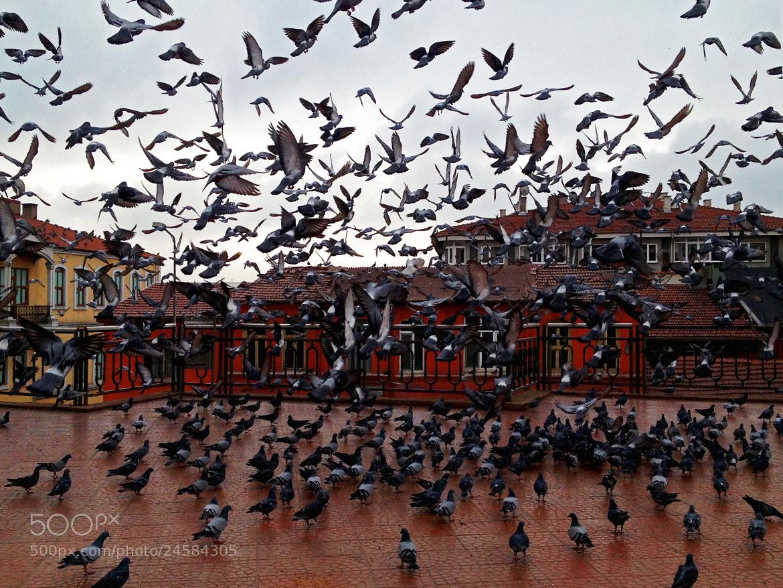 Photograph It's raining birds by Mohanad Lateef on 500px