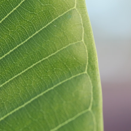Leaf Veins, Canon EOS 1100D, Canon EF 100-200mm f/4.5A