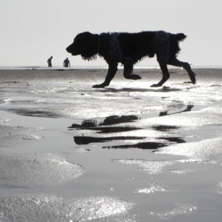 Dog on the beach, Nikon COOLPIX P100