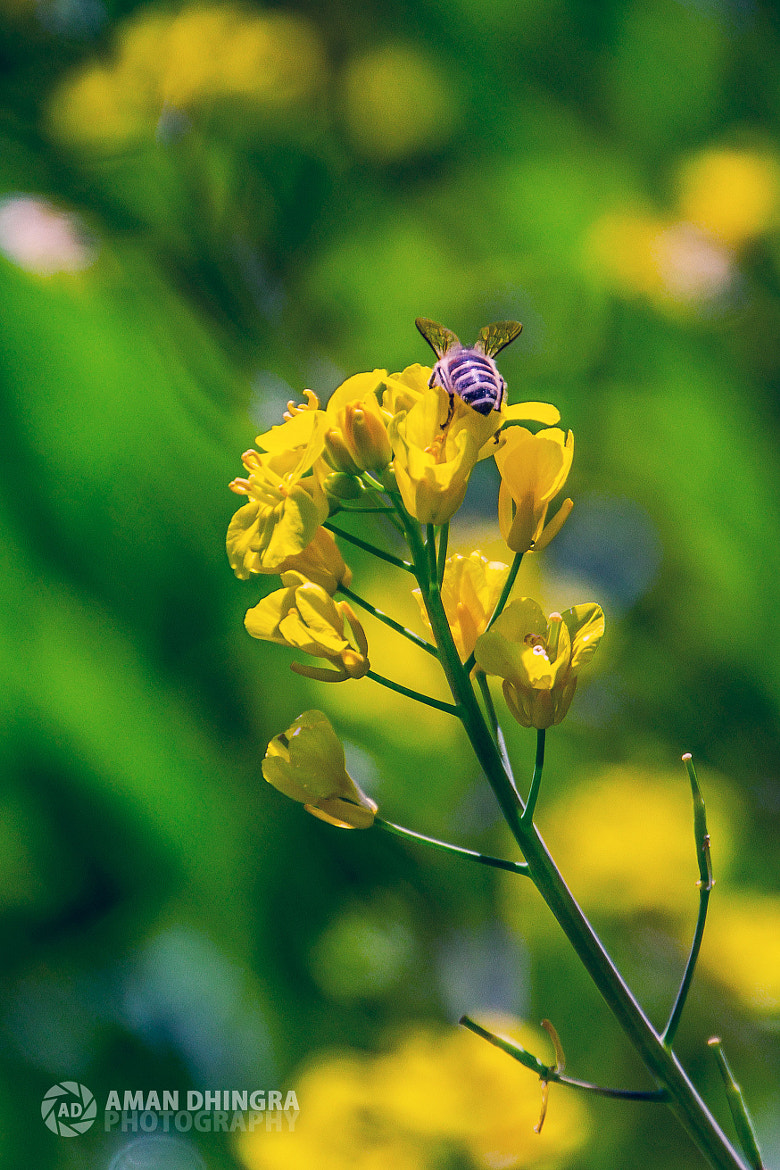 Photograph bee by Aman Dhingra on 500px