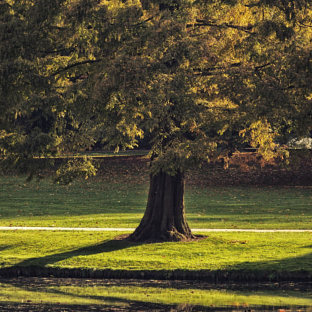 Tree, Fujifilm FinePix SL1000