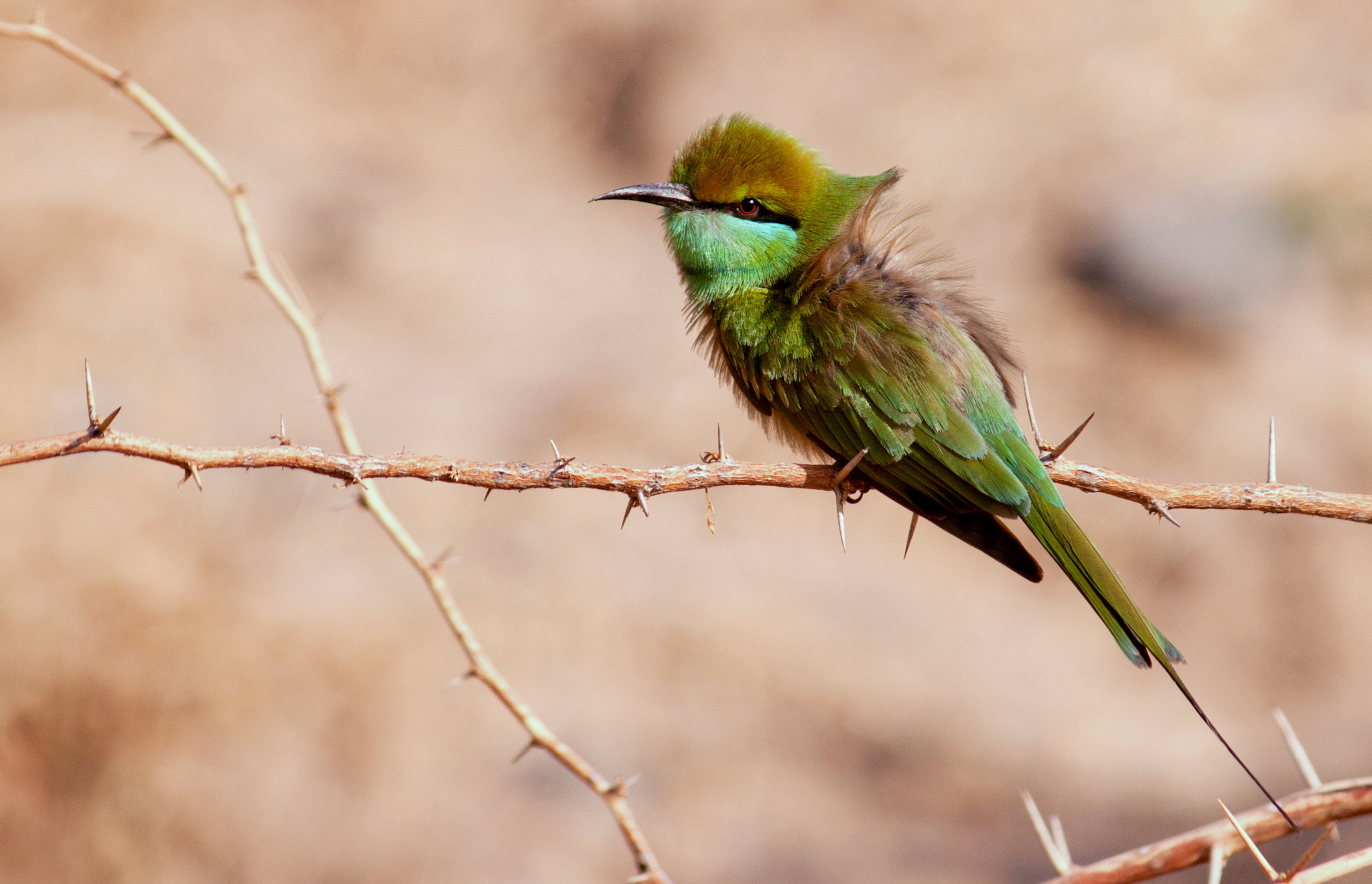 Photograph Green bee eater by Darshan Kansara on 500px
