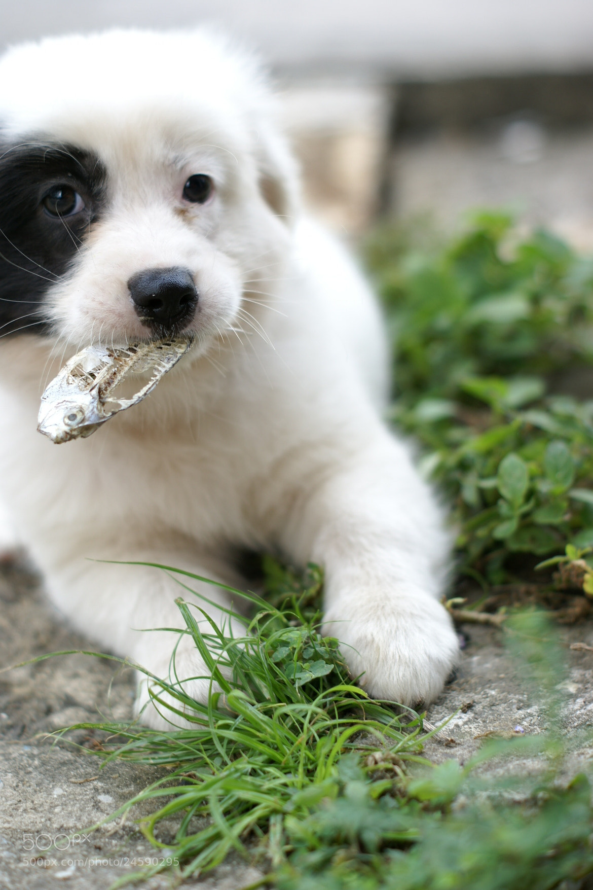 Photograph puppy hungry by riley jj on 500px