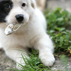 puppy hungry by riley jj (rileyjj)) on 500px.com