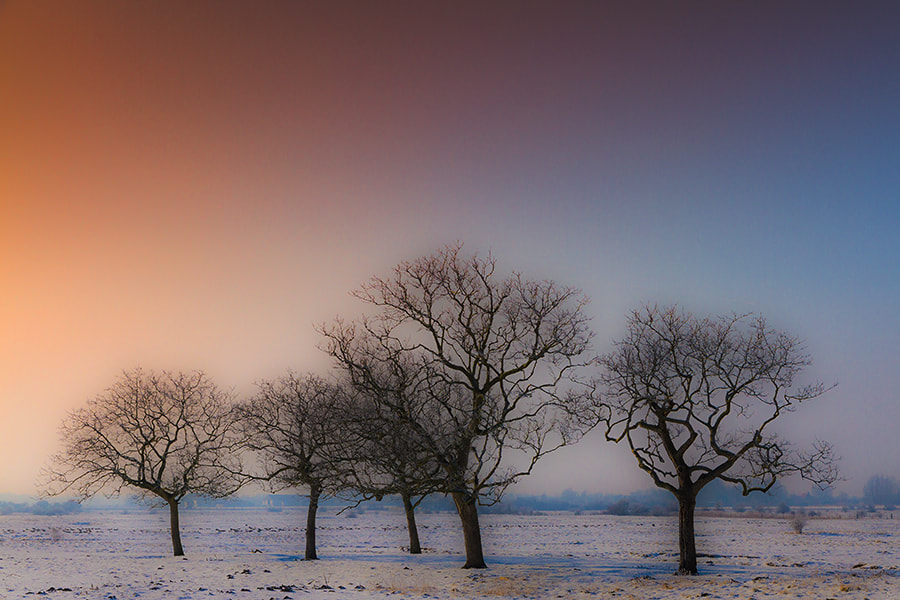 Photograph Dreamy Trees by Deen Guldemond on 500px
