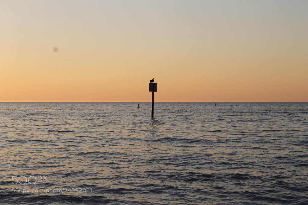 Photograph Clearwater beach, Florida by Farid Ghasemasad on 500px