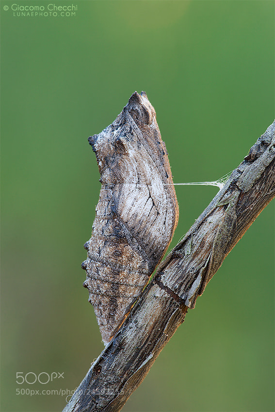 Photograph Cocoon by Giacomo Checchi on 500px