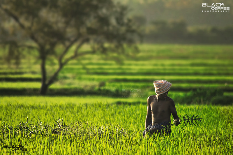 Photograph Green Harvest by Ajith Mathew on 500px