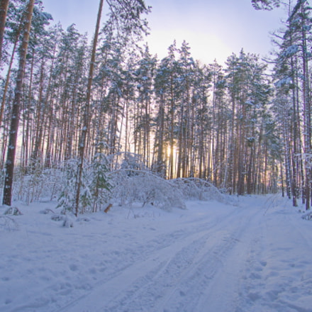 Ivanovka Forest. Evening Road.  .  ., Sony ILCE-6000