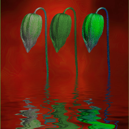 Green flower heads, Nikon COOLPIX P7700