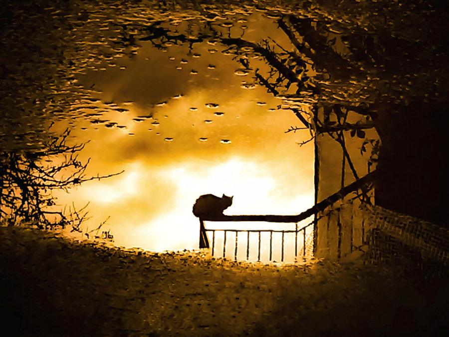 Furry Tail by Jenny Haritou on 500px.com